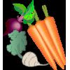 Les plantes á tubercules et racines