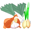 Globe & bunching onions