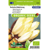 SL0101 -Brussels Chicory Mechelse early
