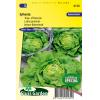 SL0130 - Lettuce Butterhead Sylvesta