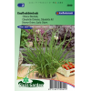 SL2040 - Chives Chinese, Garlic chives (Allium tuberosum)