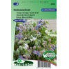 SL2050 - Borage Blauw en wit (Borago officinalis)